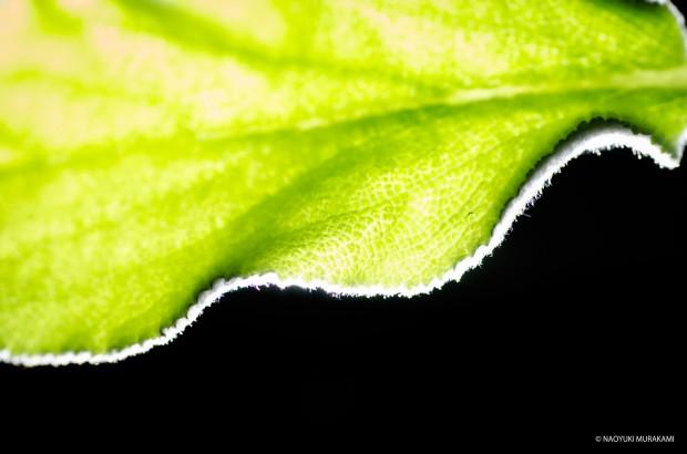 Plants_013