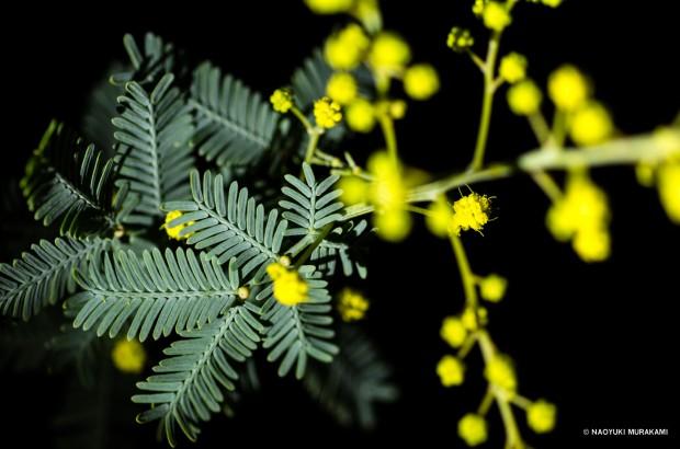 Plants_016