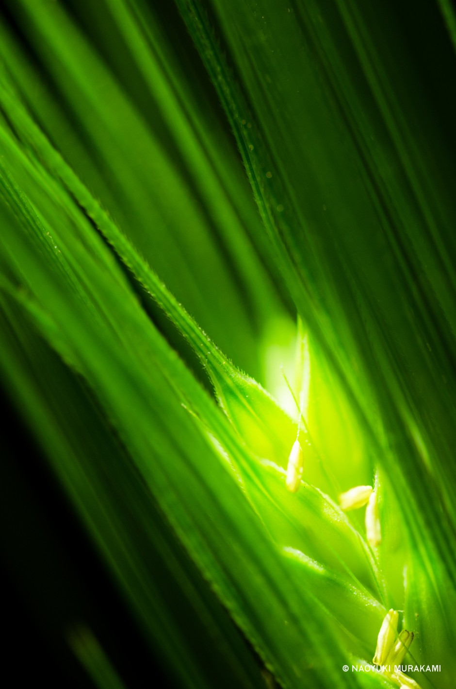 Plants_022
