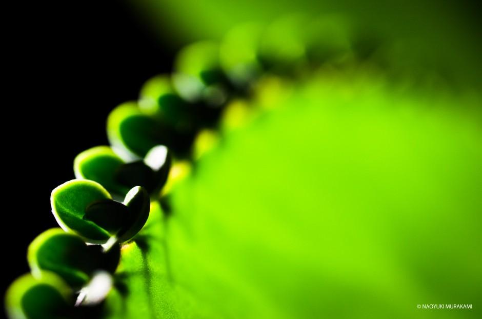 Plants_008