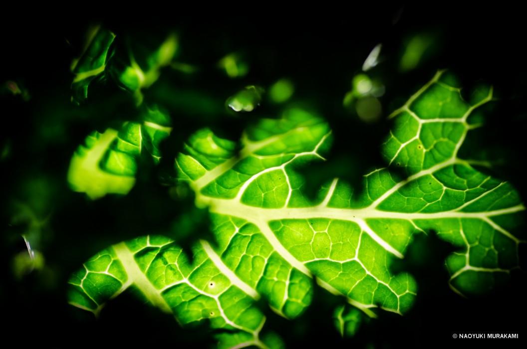 Plants_035