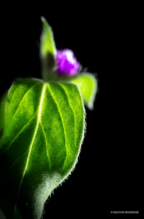 Plants_021