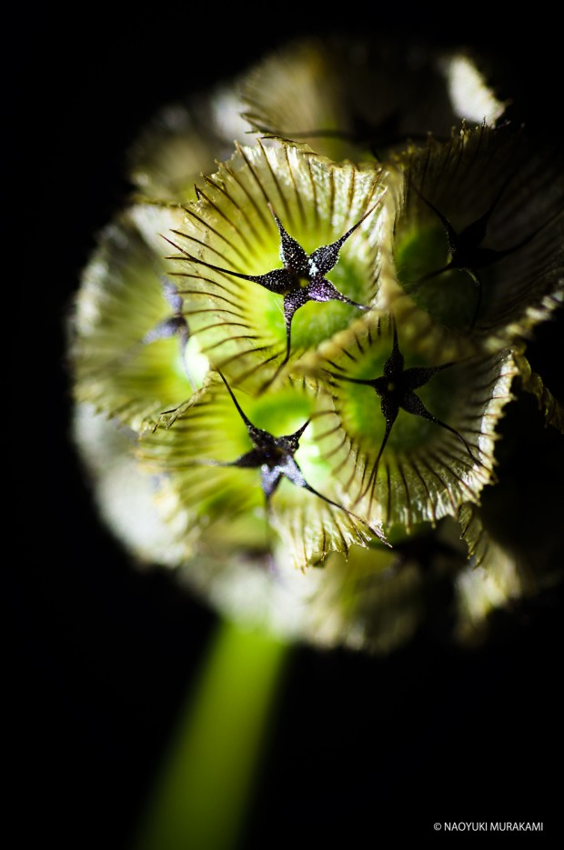 Plants_026