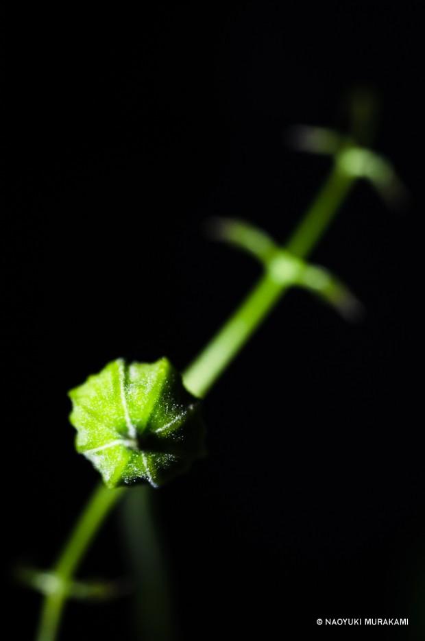 Plants_019
