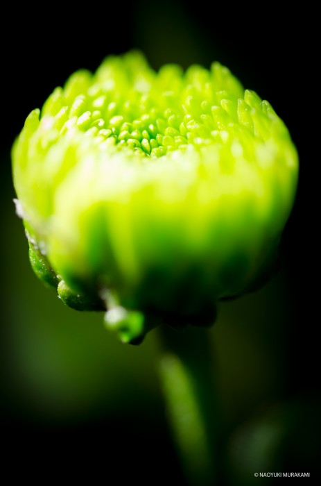 Plants_005