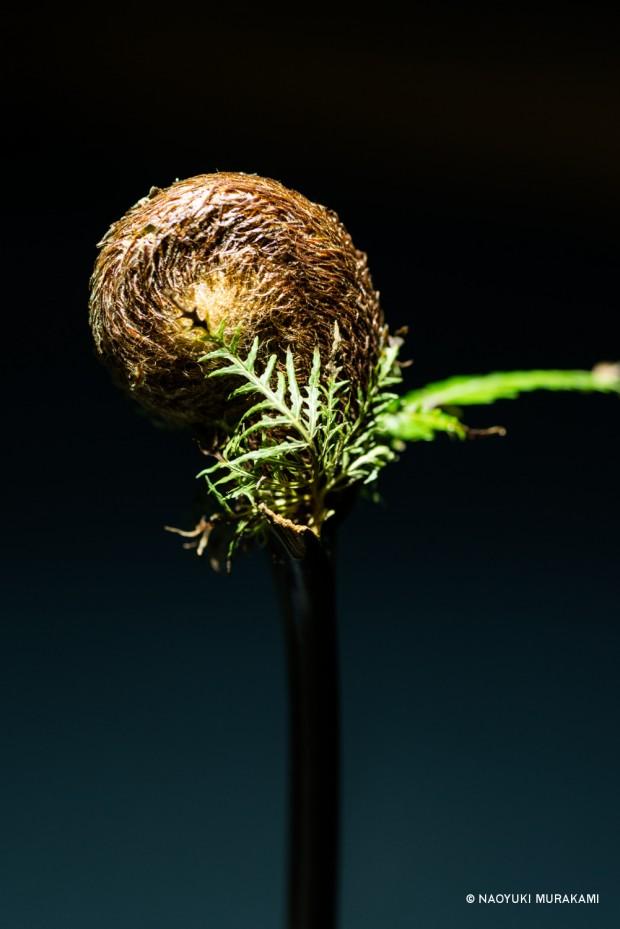 Plants_036