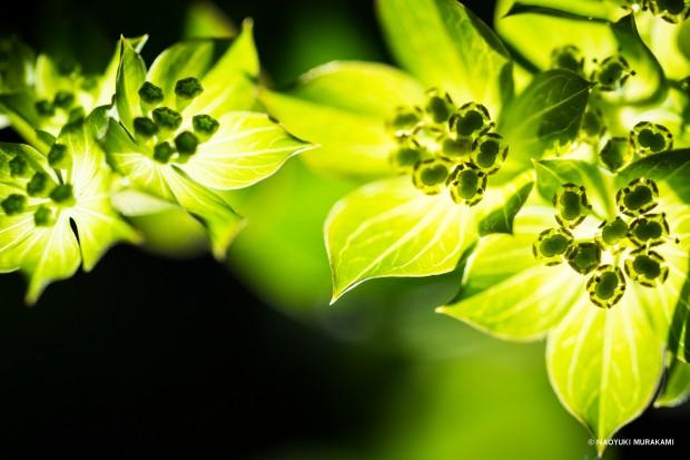Plants_041