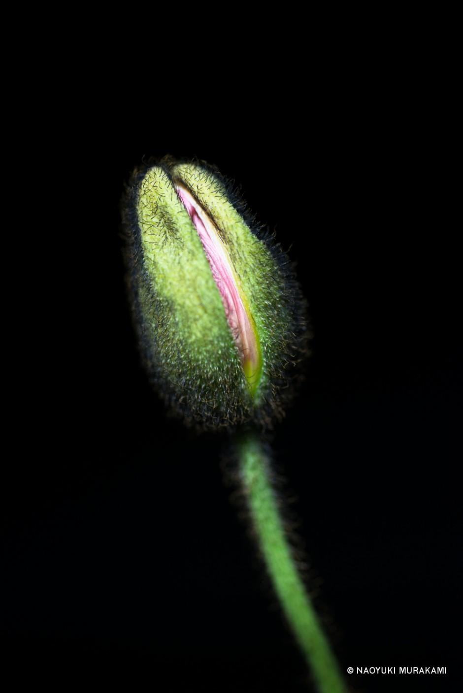 Plants_040