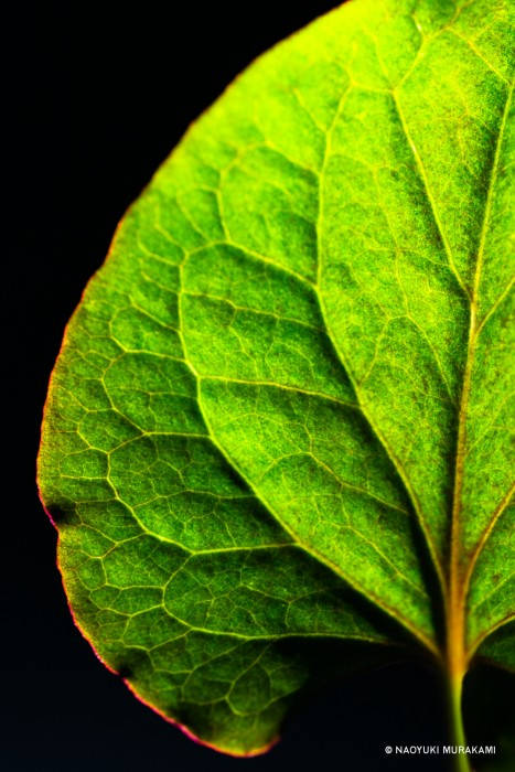 Plants_043