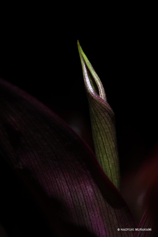 Plants_048